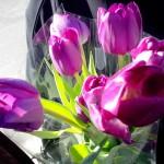 51 – Une amitié sans confiance c'est comme une fleur sans parfum