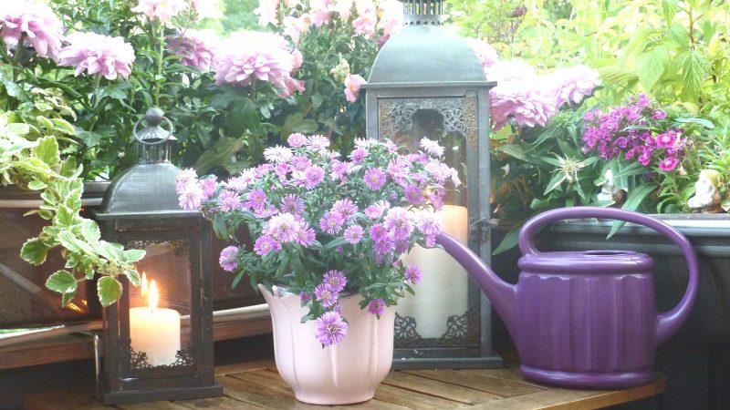 Faire son jardin en appartement : toutes nos astuces