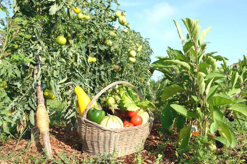 La permaculture, ou comment cultiver de manière éthique