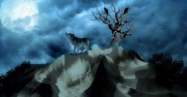 le loup et l'agneau