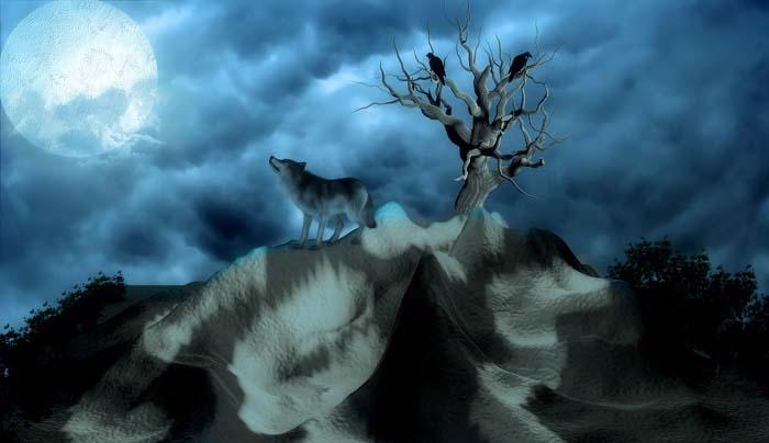 Contes algériens : le loup et l'agneau