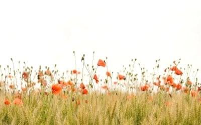 5 gestes écologiques (et très simples) à appliquer au quotidien